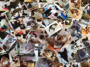 集まった猫写真は、約1000枚!
