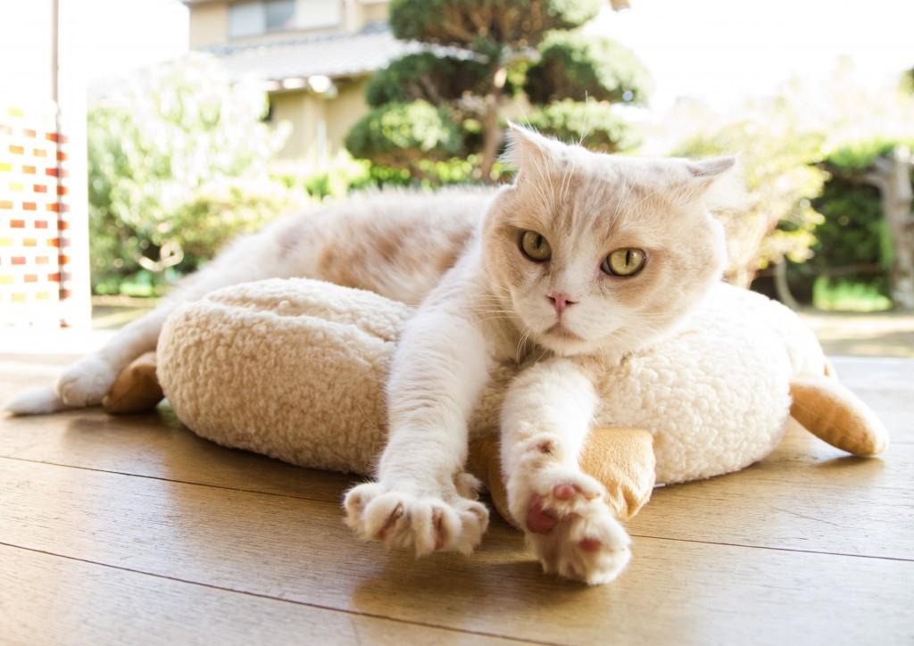 主演猫のシナモン。その他、スター猫がたくさん出演するとのこと♪