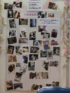 こちらは、にゃんだらけVol.1から大好評のにゃんピクボードの「プチ版」。来場者さんがご自慢の愛猫写真を、持ってきてくれました。
