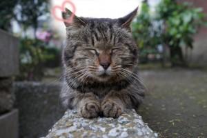 にゃんだらけも、桜猫活動を応援しています