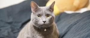 モデル猫の名前は、「毛玉」くんといいます。