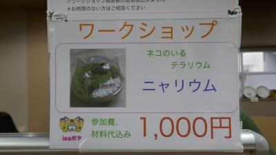 ☆猫の器に苔の箱庭を作る「ニャリウム」(写真:KuMi)